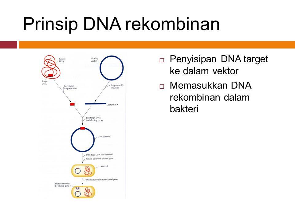 Prinsip DNA rekombinan  Penyisipan DNA target ke dalam vektor  Memasukkan DNA rekombinan dalam bakteri
