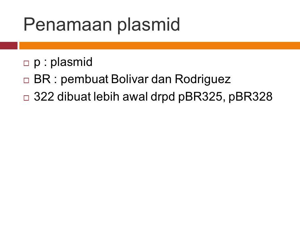 Penamaan plasmid  p : plasmid  BR : pembuat Bolivar dan Rodriguez  322 dibuat lebih awal drpd pBR325, pBR328