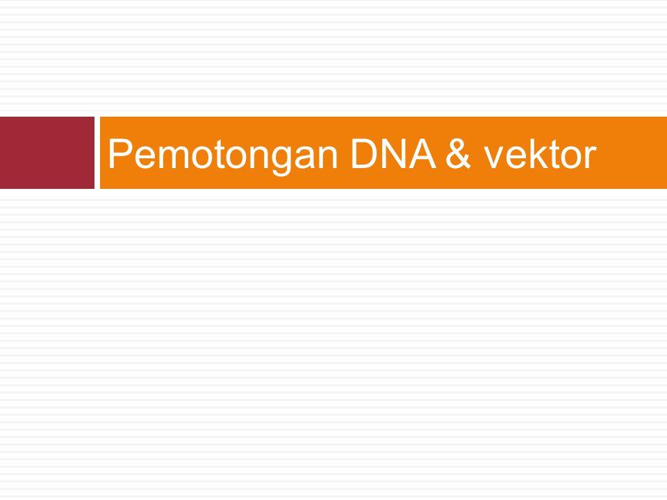 Pemotongan DNA & vektor