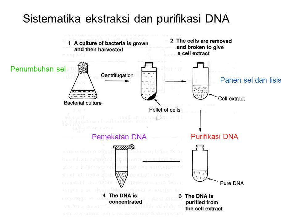 1. Ekstraksi sel Butuh reagen LYSIS detergen Buffer enzim protease panas cell extract