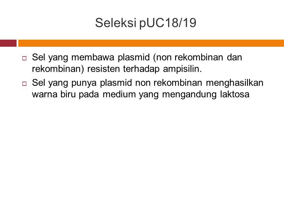 Seleksi pUC18/19  Sel yang membawa plasmid (non rekombinan dan rekombinan) resisten terhadap ampisilin.  Sel yang punya plasmid non rekombinan mengh