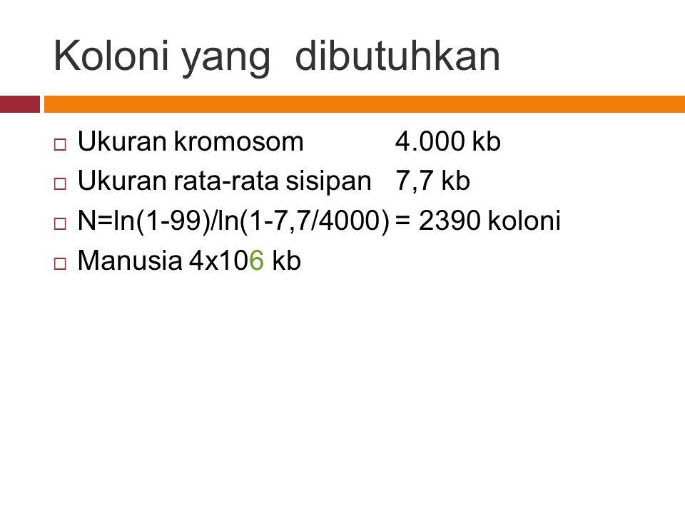 Koloni yang dibutuhkan  Ukuran kromosom4.000 kb  Ukuran rata-rata sisipan7,7 kb  N=ln(1-99)/ln(1-7,7/4000) = 2390 koloni  Manusia 4x106 kb