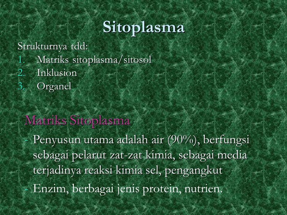 Sitoplasma Strukturnya tdd: 1.Matriks sitoplasma/sitosol 2.Inklusion 3.Organel Matriks Sitoplasma -Penyusun utama adalah air (90%), berfungsi sebagai pelarut zat-zat kimia, sebagai media terjadinya reaksi kimia sel, pengangkut -Enzim, berbagai jenis protein, nutrien.