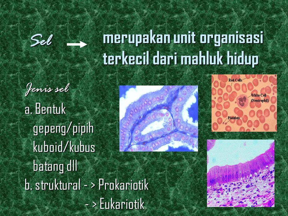 merupakan unit organisasi terkecil dari mahluk hidup Jenis sel a. Bentuk gepeng/pipih gepeng/pipih kuboid/kubus kuboid/kubus batang dll batang dll b.