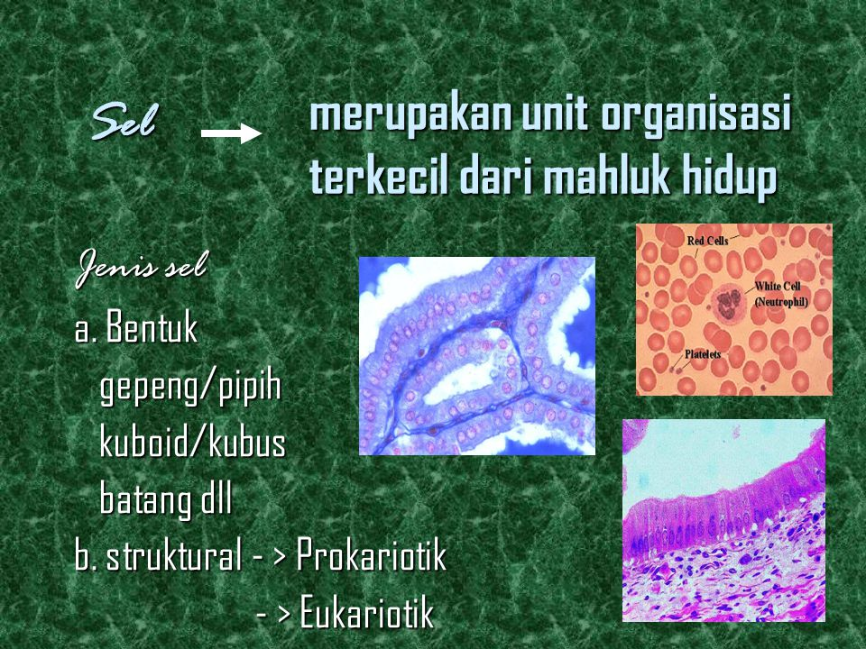 merupakan unit organisasi terkecil dari mahluk hidup Jenis sel a.