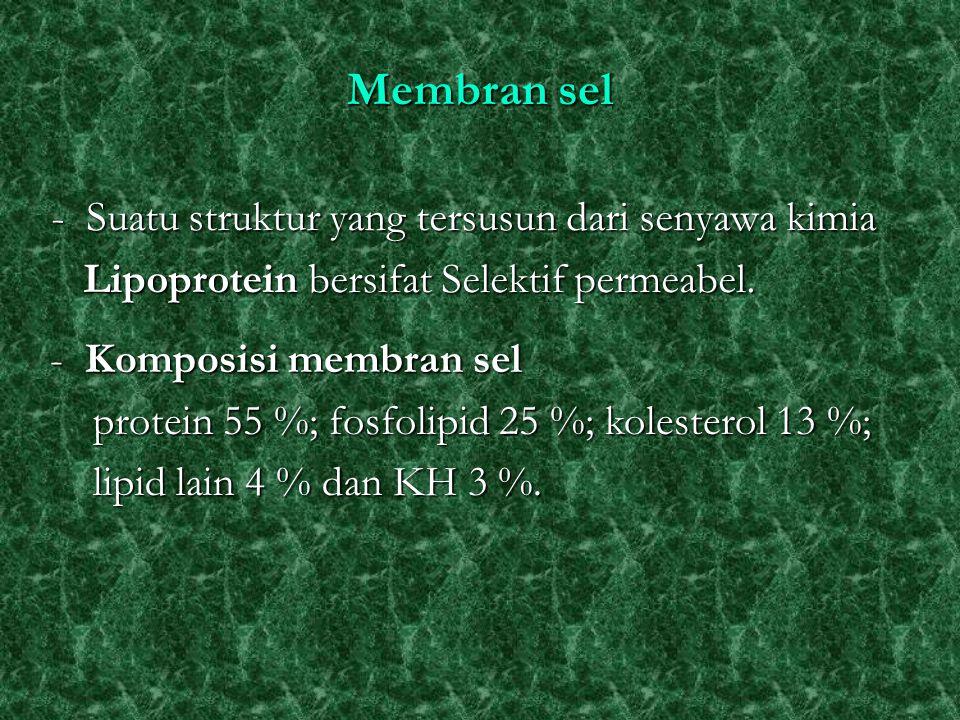 Membran sel - Suatu struktur yang tersusun dari senyawa kimia Lipoprotein bersifat Selektif permeabel. Lipoprotein bersifat Selektif permeabel. - Komp
