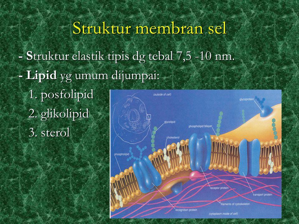 Struktur membran sel - Struktur elastik tipis dg tebal 7,5 -10 nm.