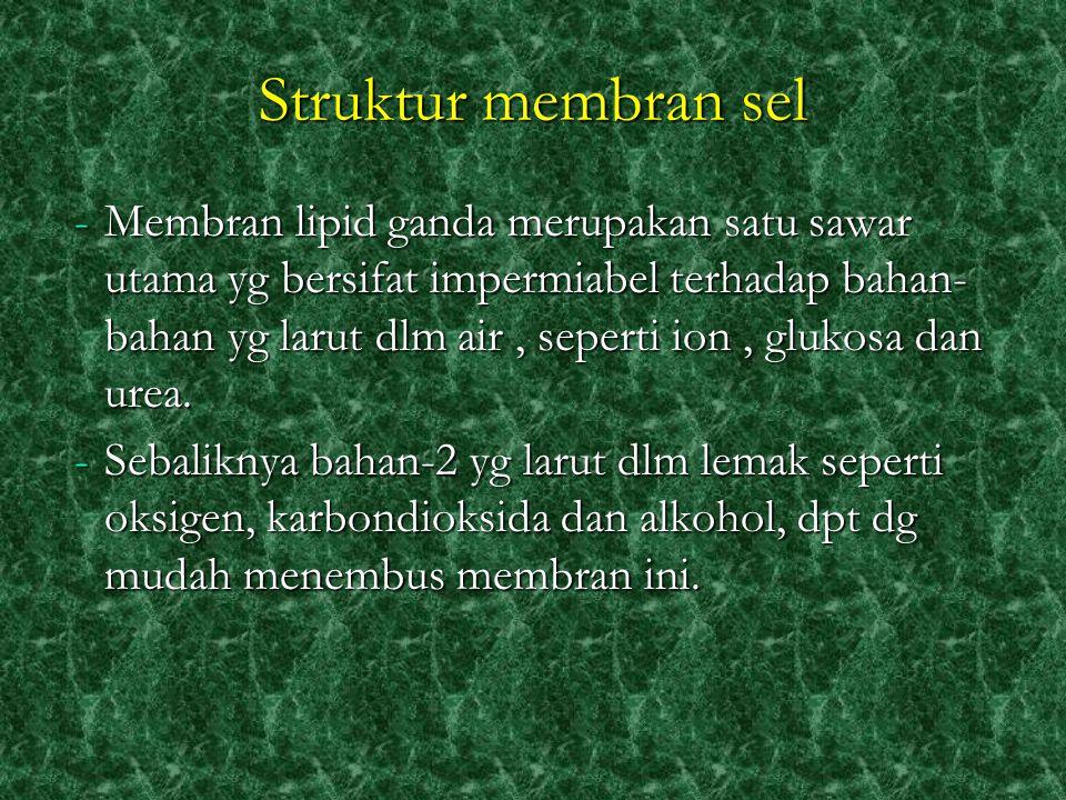 Organel Tdd 2 jenis: 1.Organel bermembran 2.Organel tidak bermembran S esuatu struktur yang terdapat didalam sitoplasma hampir semua jenis sel, merupakan organ yang kecil kecil, bersifat hidup dan mempunyai fungsi yang spesifik didalam sel