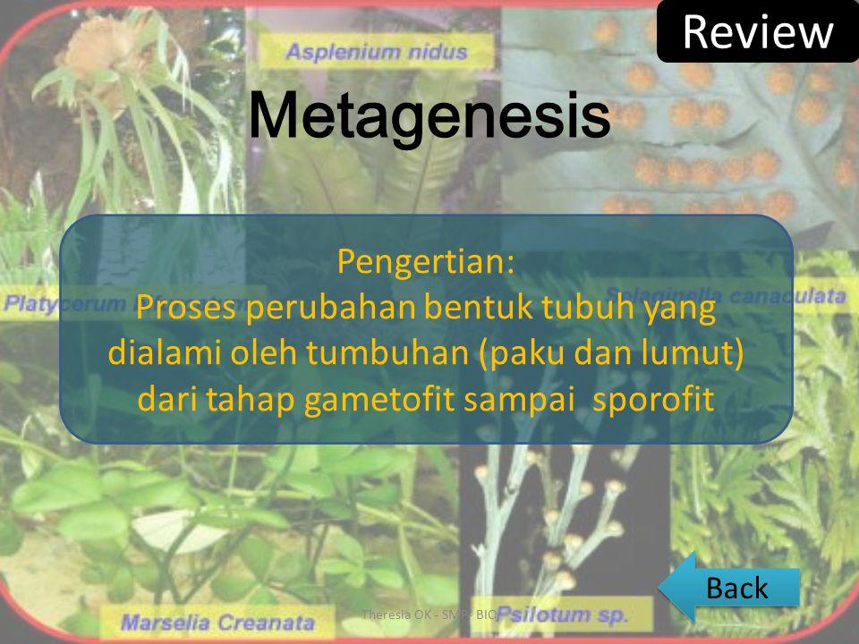 Metamorfosis Pengertian: Proses perubahan bentuk tubuh yang dialami oleh hewan (amphibi dan insect) dari tahap telur sampai dewasa Metamorfosis Heterometabola Metamorfosis Holometabola Theresia OK - SMP- BIO