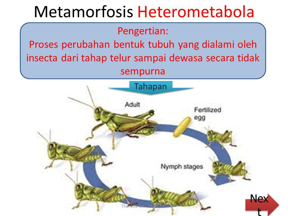 KESIMPULAN Metamorfosis Heterometabola Metamorfosis Holometabola Theresia OK - SMP- BIO Larva PupaDewasa Telur Larva Dewasa Telur Quis Metamorfosis