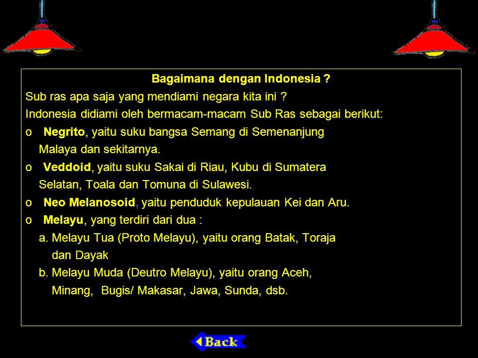 Bagaimana dengan Indonesia ? Sub ras apa saja yang mendiami negara kita ini ? Indonesia didiami oleh bermacam-macam Sub Ras sebagai berikut: o Negrito