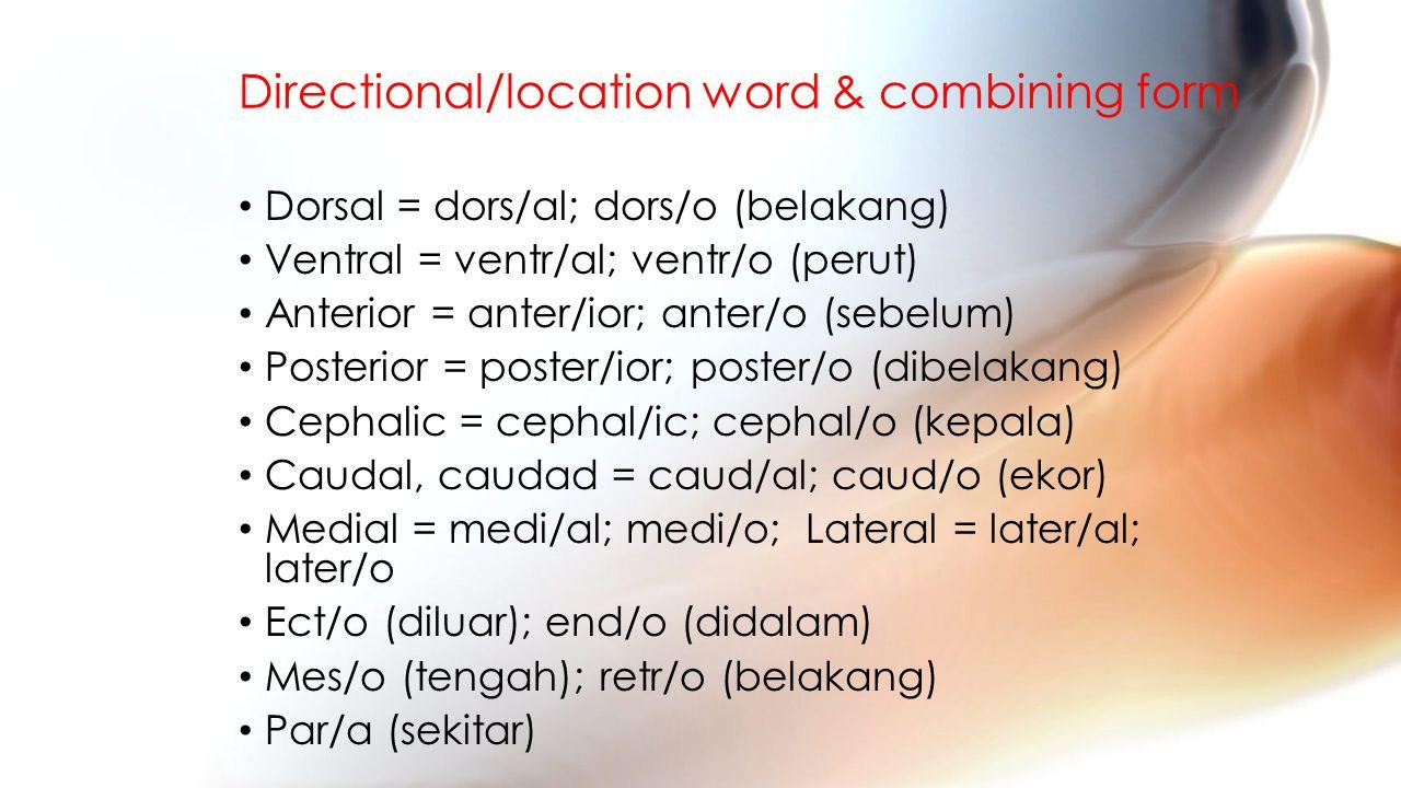 Directional/location word & combining form Dorsal = dors/al; dors/o (belakang) Ventral = ventr/al; ventr/o (perut) Anterior = anter/ior; anter/o (sebelum) Posterior = poster/ior; poster/o (dibelakang) Cephalic = cephal/ic; cephal/o (kepala) Caudal, caudad = caud/al; caud/o (ekor) Medial = medi/al; medi/o; Lateral = later/al; later/o Ect/o (diluar); end/o (didalam) Mes/o (tengah); retr/o (belakang) Par/a (sekitar)