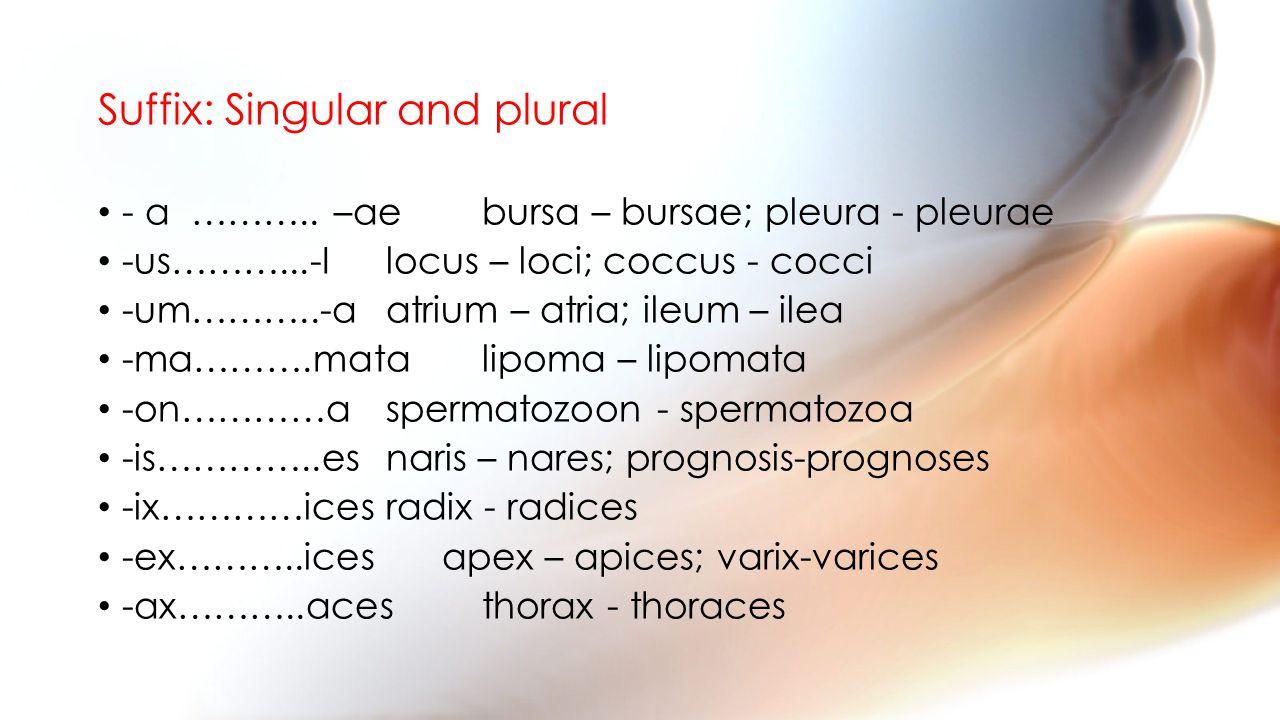 Suffix: Singular and plural - a ……….. –ae bursa – bursae; pleura - pleurae -us………...-Ilocus – loci; coccus - cocci -um………..-aatrium – atria; ileum – i