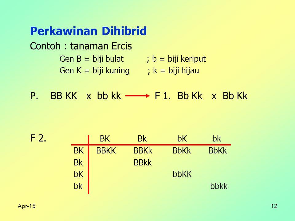 Apr-1512 Perkawinan Dihibrid Contoh : tanaman Ercis Gen B = biji bulat ; b = biji keriput Gen K = biji kuning ; k = biji hijau P.