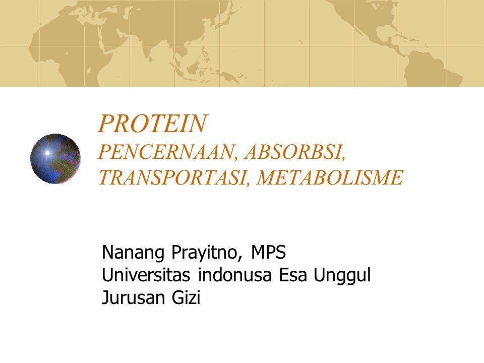 PROTEIN PENCERNAAN, ABSORBSI, TRANSPORTASI, METABOLISME Nanang Prayitno, MPS Universitas indonusa Esa Unggul Jurusan Gizi