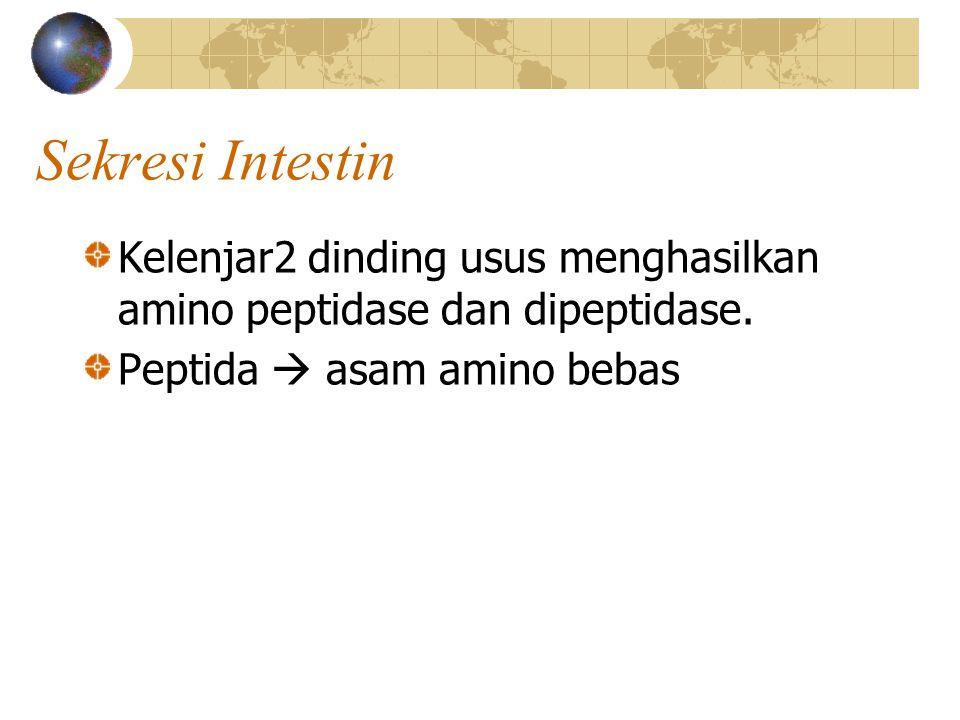 Sekresi Intestin Kelenjar2 dinding usus menghasilkan amino peptidase dan dipeptidase. Peptida  asam amino bebas