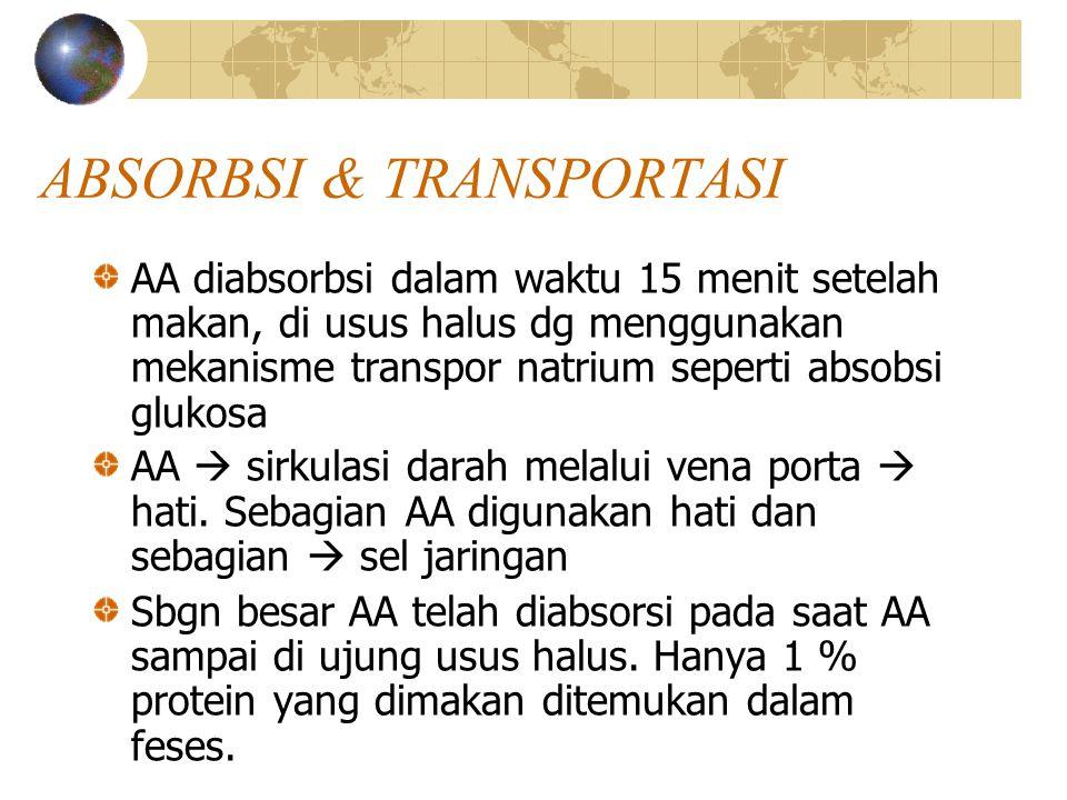 ABSORBSI & TRANSPORTASI AA diabsorbsi dalam waktu 15 menit setelah makan, di usus halus dg menggunakan mekanisme transpor natrium seperti absobsi gluk