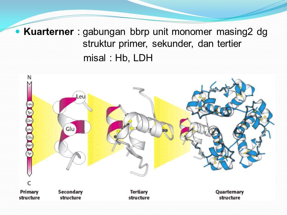 Kuarterner : gabungan bbrp unit monomer masing2 dg struktur primer, sekunder, dan tertier misal : Hb, LDH