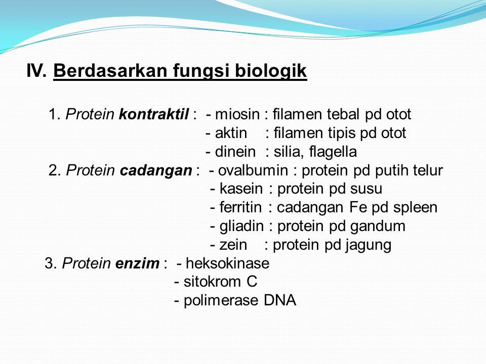 IV. Berdasarkan fungsi biologik 1. Protein kontraktil : - miosin : filamen tebal pd otot - aktin : filamen tipis pd otot - dinein : silia, flagella 2.