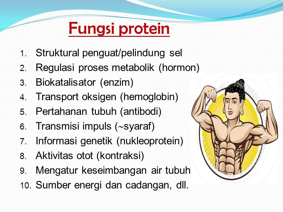 Fungsi protein 1. Struktural penguat/pelindung sel 2. Regulasi proses metabolik (hormon) 3. Biokatalisator (enzim) 4. Transport oksigen (hemoglobin) 5