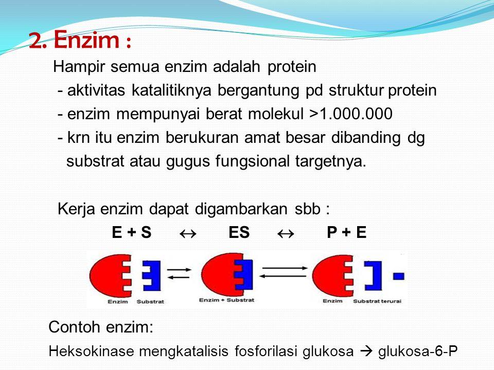 2. Enzim : Hampir semua enzim adalah protein - aktivitas katalitiknya bergantung pd struktur protein - enzim mempunyai berat molekul >1.000.000 - krn