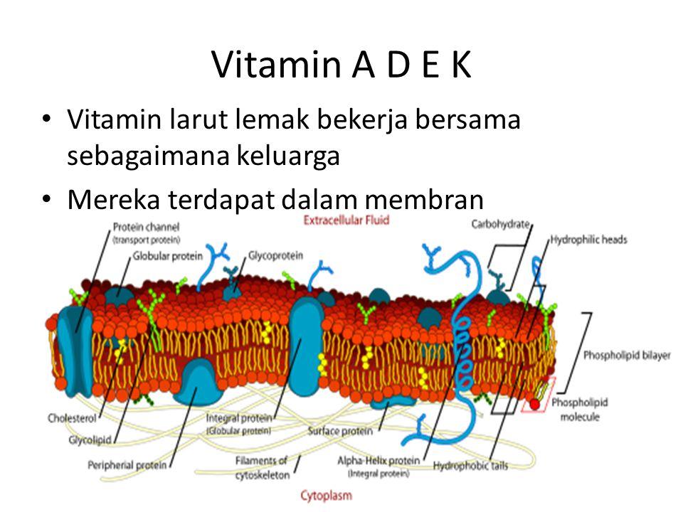 Vitamin E (419)  Tocopherols (more active compounds) α, β, γ & δ  Tocotrienols α, β, γ & δ