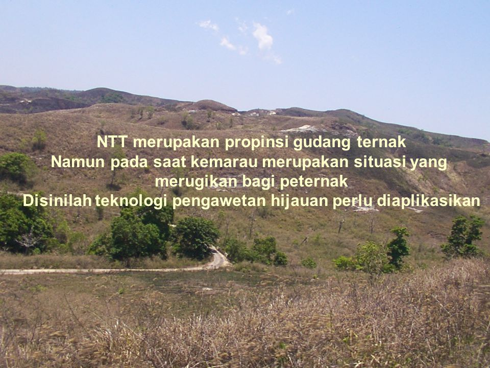 NTT merupakan propinsi gudang ternak Namun pada saat kemarau merupakan situasi yang merugikan bagi peternak Disinilah teknologi pengawetan hijauan per