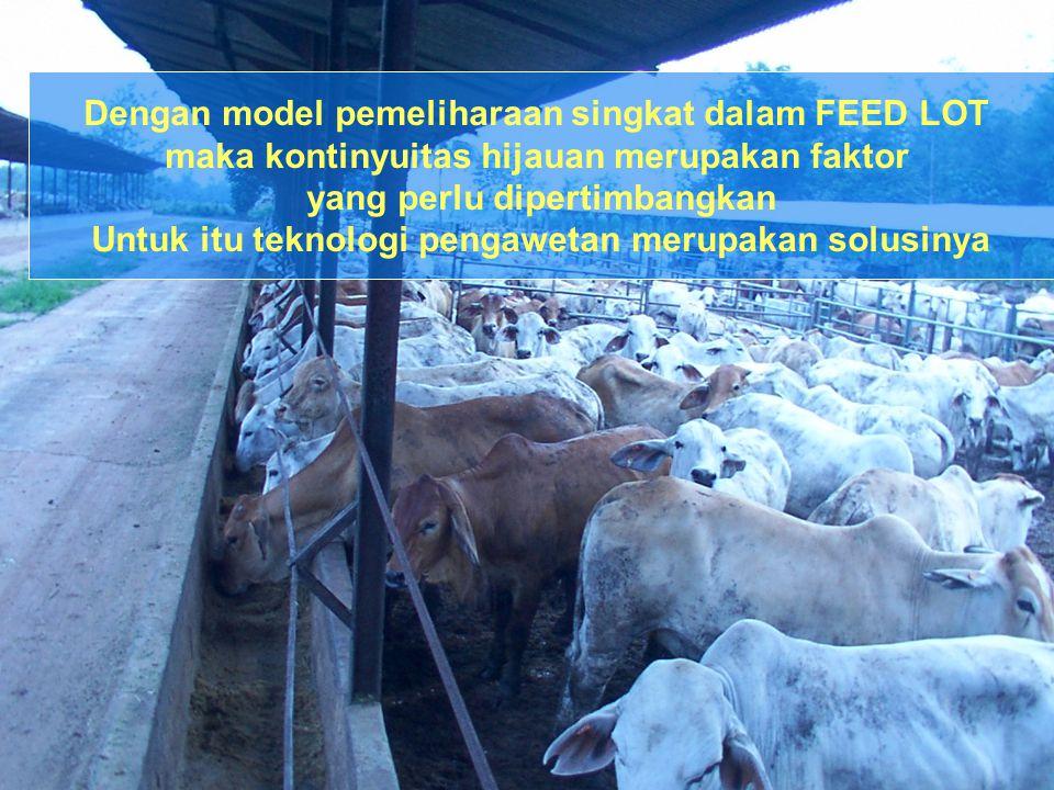 Dengan model pemeliharaan singkat dalam FEED LOT maka kontinyuitas hijauan merupakan faktor yang perlu dipertimbangkan Untuk itu teknologi pengawetan
