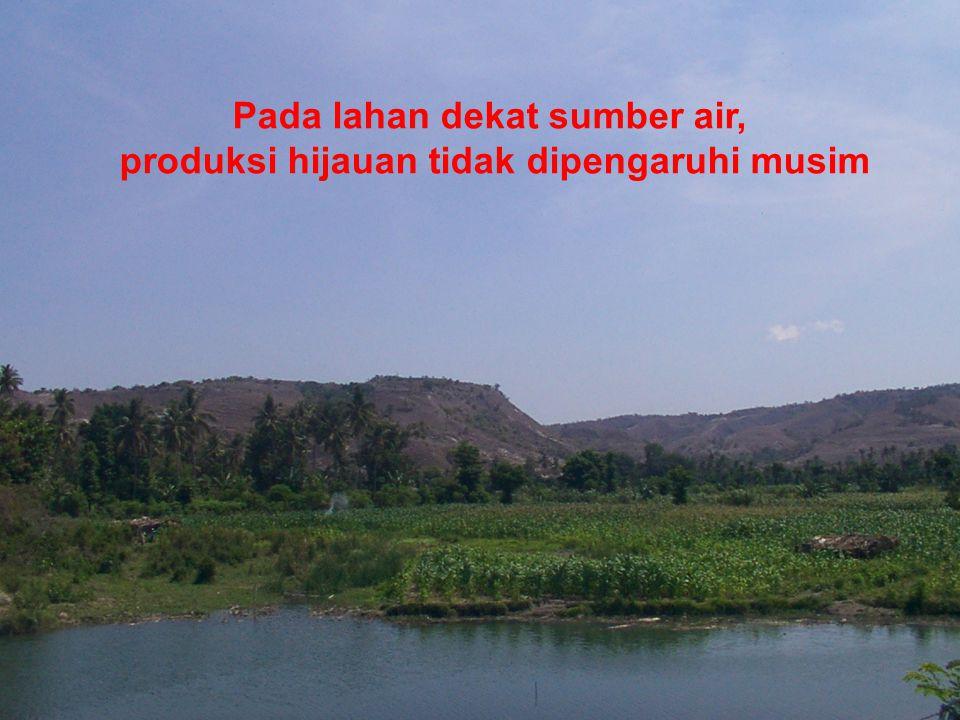 Pada lahan dekat sumber air, produksi hijauan tidak dipengaruhi musim
