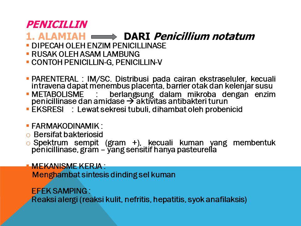 PENICILLIN 1. ALAMIAH DARI Penicillium notatum  DIPECAH OLEH ENZIM PENICILLINASE  RUSAK OLEH ASAM LAMBUNG  CONTOH PENICILLIN-G, PENICILLIN-V  PARE