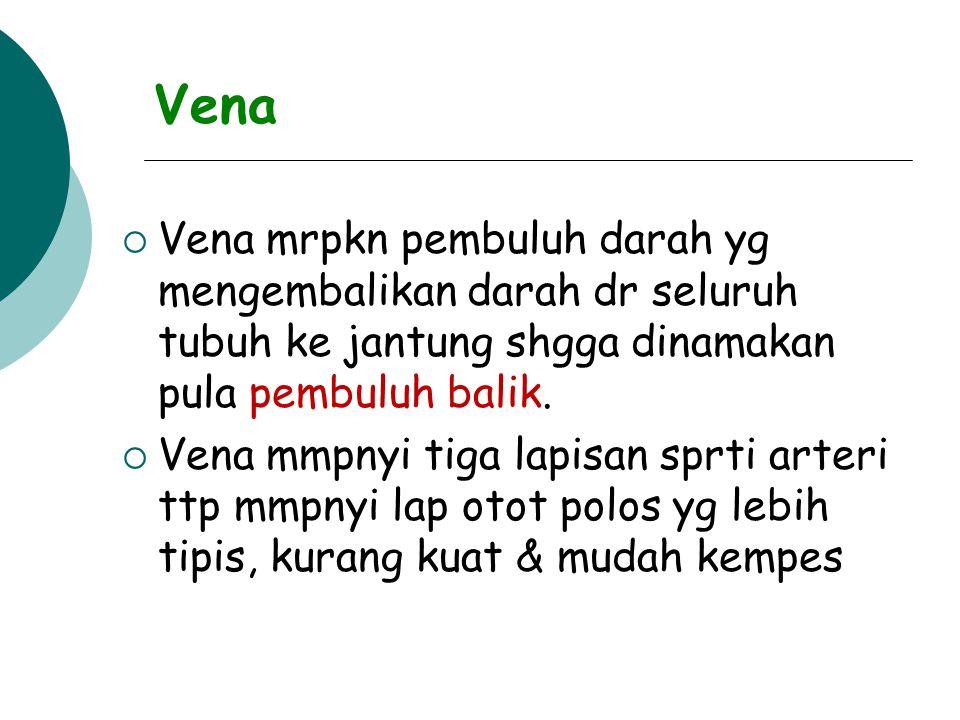 Vena VVena mrpkn pembuluh darah yg mengembalikan darah dr seluruh tubuh ke jantung shgga dinamakan pula pembuluh balik.