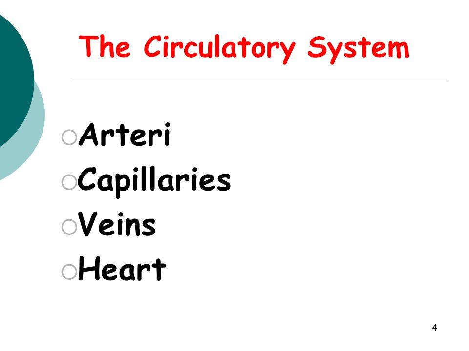 4 AArteri CCapillaries VVeins HHeart The Circulatory System
