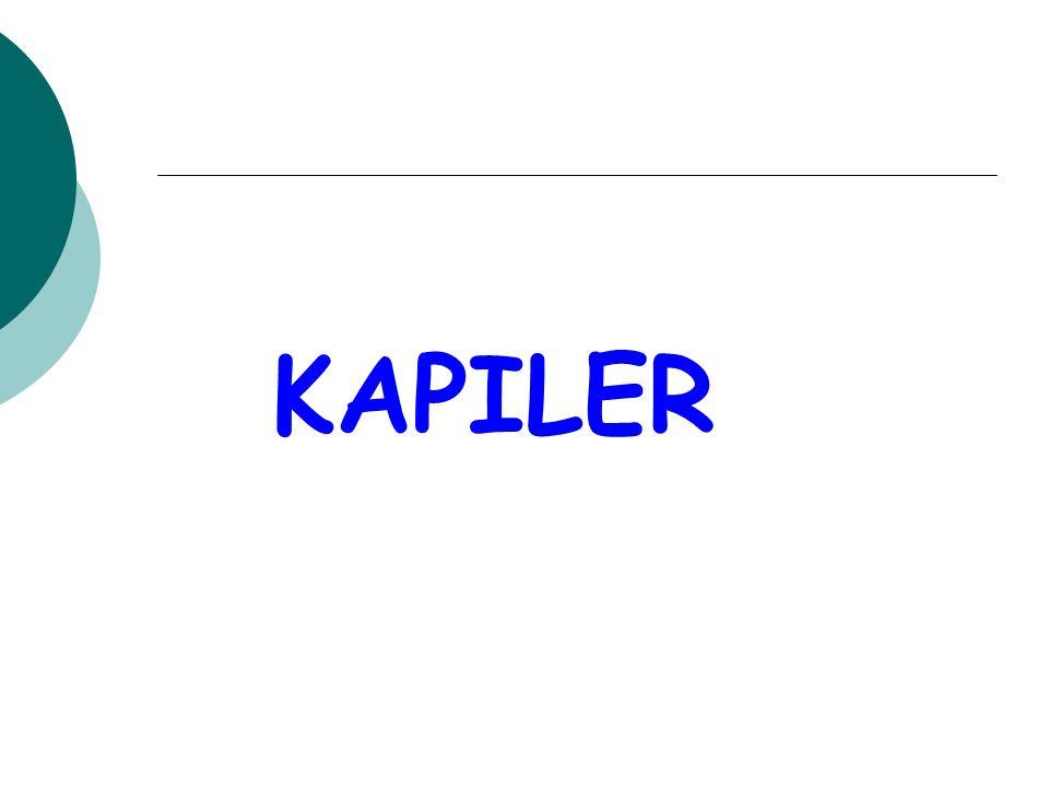 KAPILER