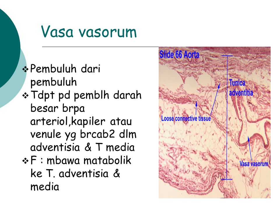 Vasa vasorum  Pembuluh dari pembuluh  Tdpt pd pemblh darah besar brpa arteriol,kapiler atau venule yg brcab2 dlm adventisia & T media  F : mbawa ma