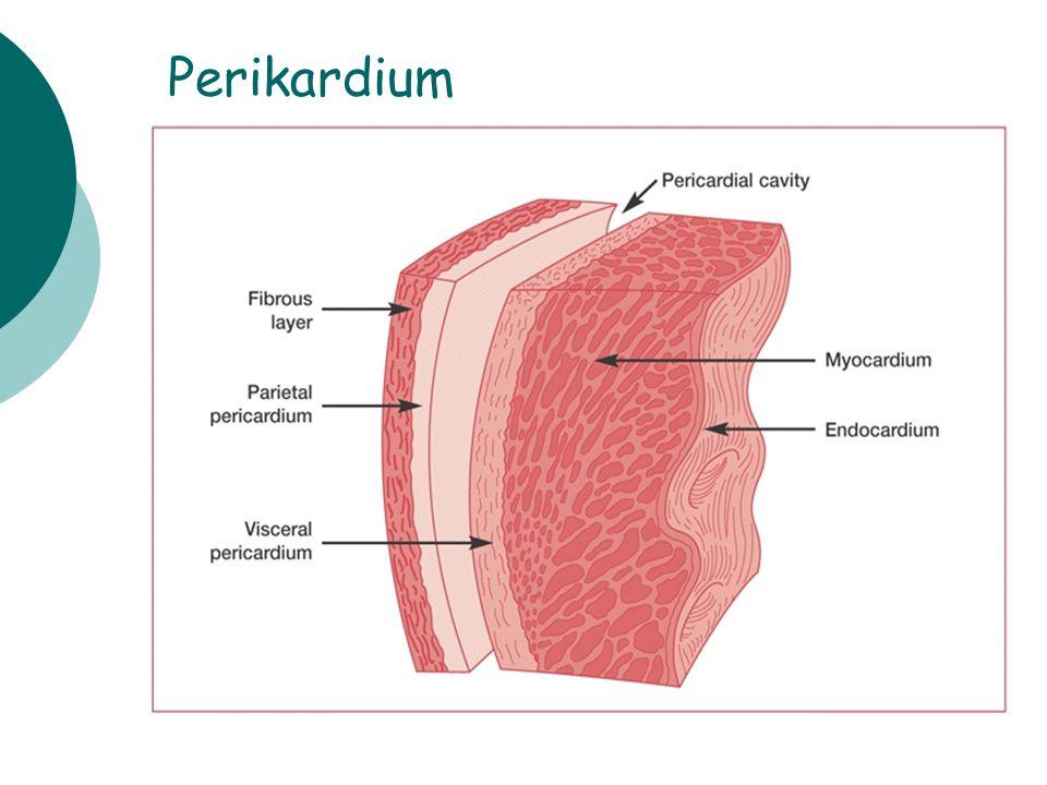 Perikardium