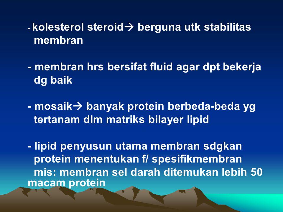 - kolesterol steroid  berguna utk stabilitas membran - membran hrs bersifat fluid agar dpt bekerja dg baik - mosaik  banyak protein berbeda-beda yg
