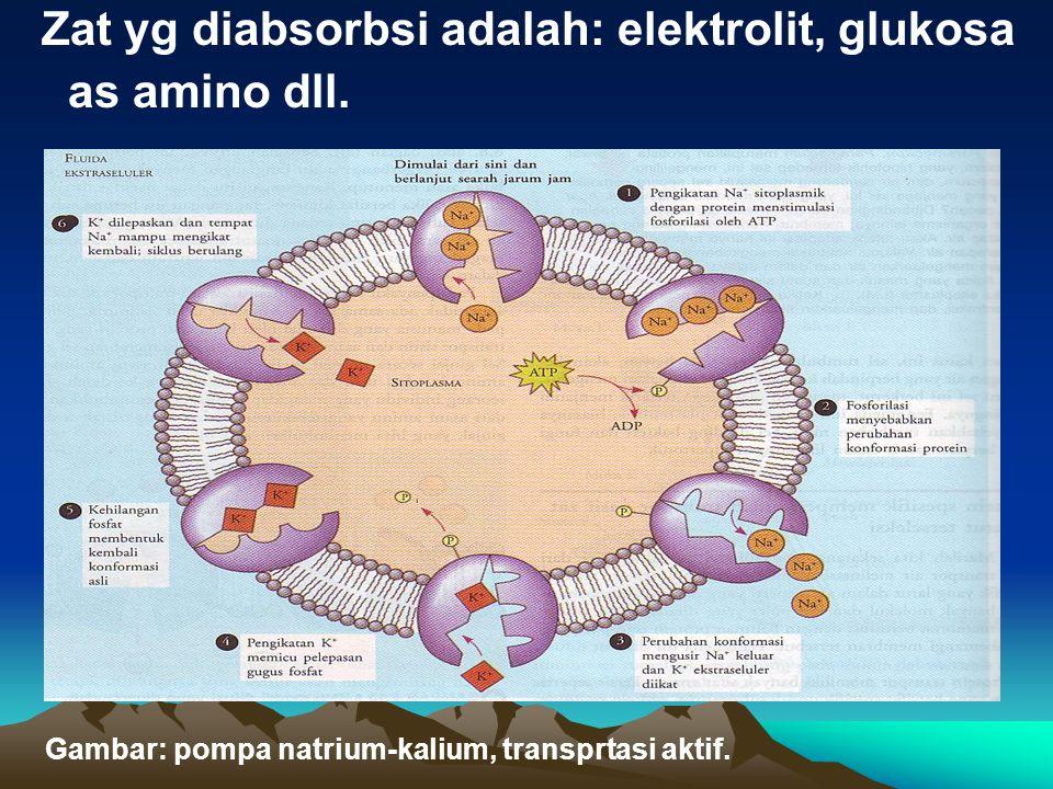 Zat yg diabsorbsi adalah: elektrolit, glukosa as amino dll. Gambar: pompa natrium-kalium, transprtasi aktif.