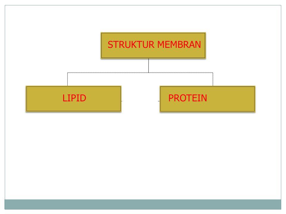 STRUKTUR MEMBRAN LIPIDPROTEIN