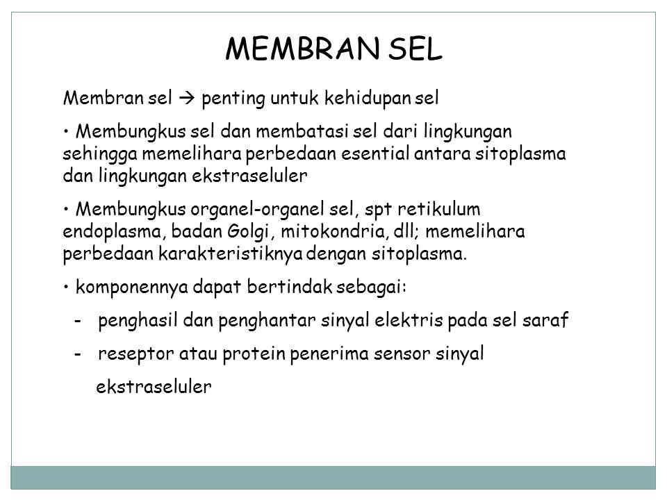 MEMBRAN SEL Membran sel  penting untuk kehidupan sel Membungkus sel dan membatasi sel dari lingkungan sehingga memelihara perbedaan esential antara s