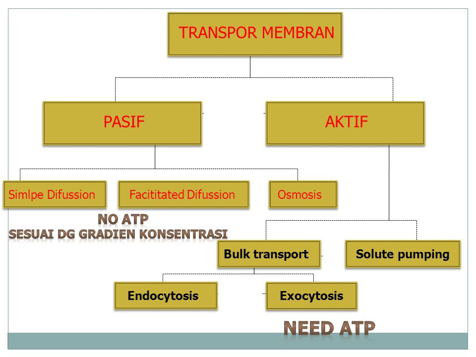 TRANSPOR MEMBRAN PASIFAKTIF Simlpe DifussionFacititated DifussionOsmosisBulk transportEndocytosisExocytosisSolute pumping