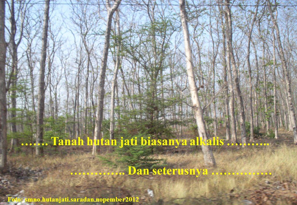 ……. Tanah hutan jati biasanya alkalis ……….. ………….. Dan seterusnya …………… Foto: smno.hutanjati.saradan.nopember2012