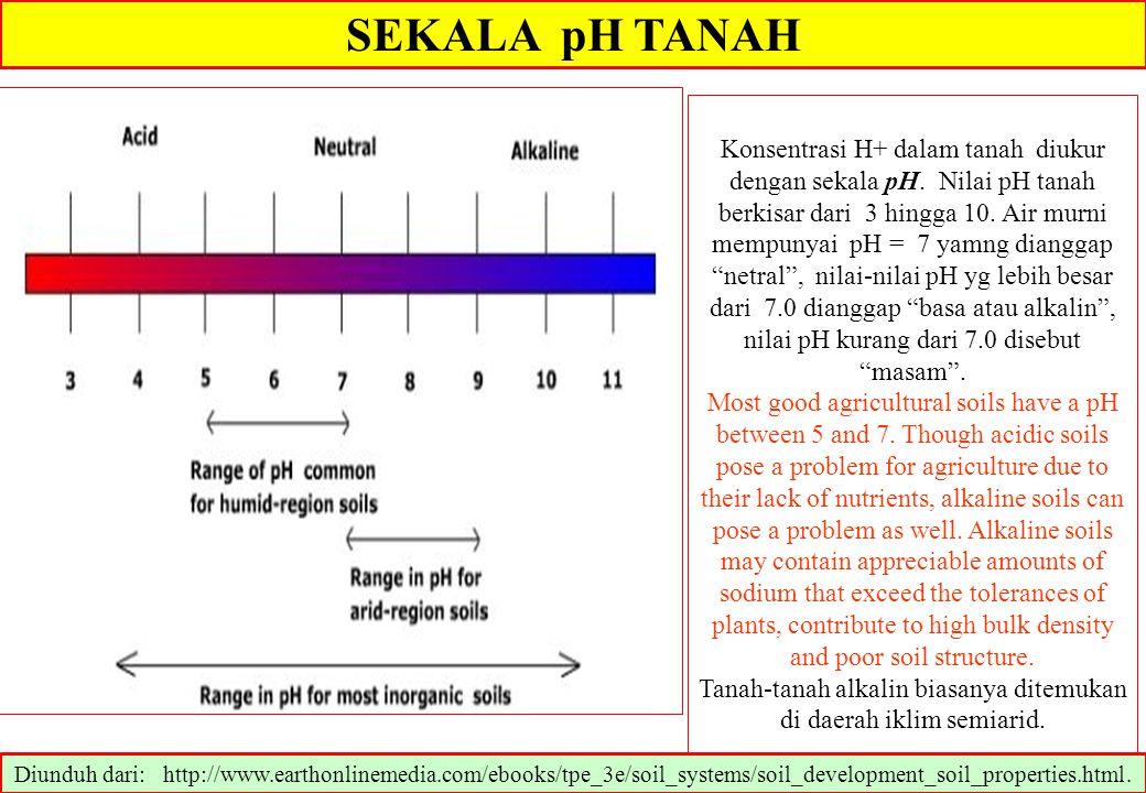 SEKALA pH TANAH Konsentrasi H+ dalam tanah diukur dengan sekala pH. Nilai pH tanah berkisar dari 3 hingga 10. Air murni mempunyai pH = 7 yamng diangga