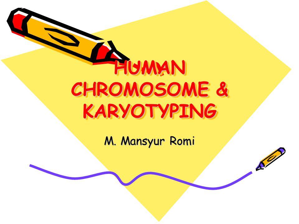 HUMAN CHROMOSOME & KARYOTYPING M. Mansyur Romi