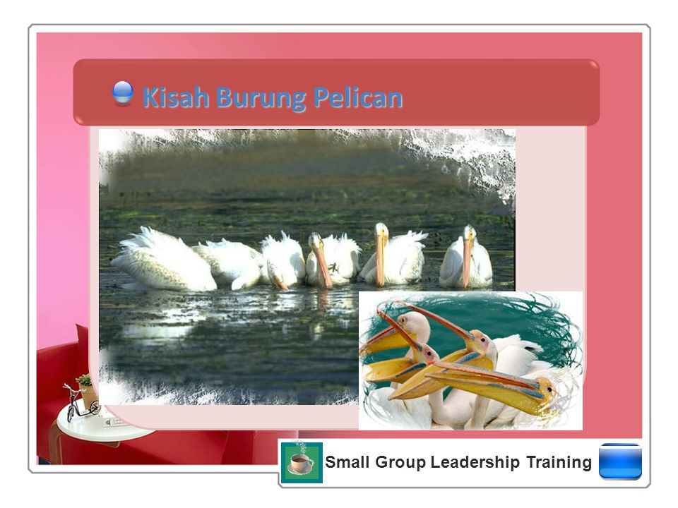 Small Group Leadership Training Kisah Burung Pelican