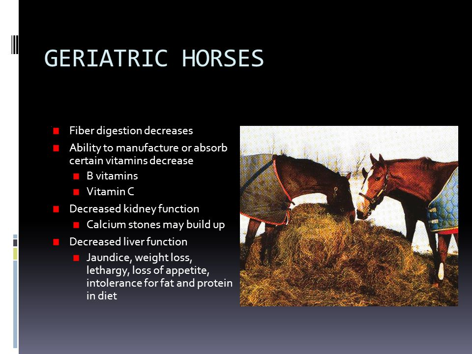 GERIATRIC HORSES Fiber digestion decreases Ability to manufacture or absorb certain vitamins decrease B vitamins Vitamin C Decreased kidney function Calcium stones may build up Decreased liver function Jaundice, weight loss, lethargy, loss of appetite, intolerance for fat and protein in diet