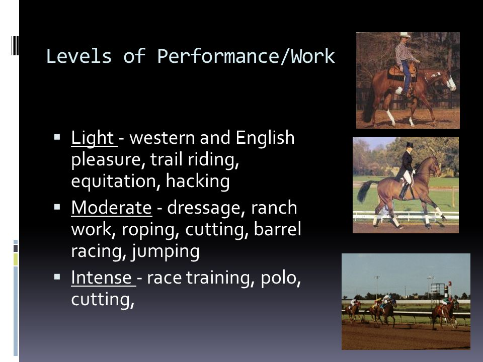 Levels of Performance/Work  Light - western and English pleasure, trail riding, equitation, hacking  Moderate - dressage, ranch work, roping, cuttin