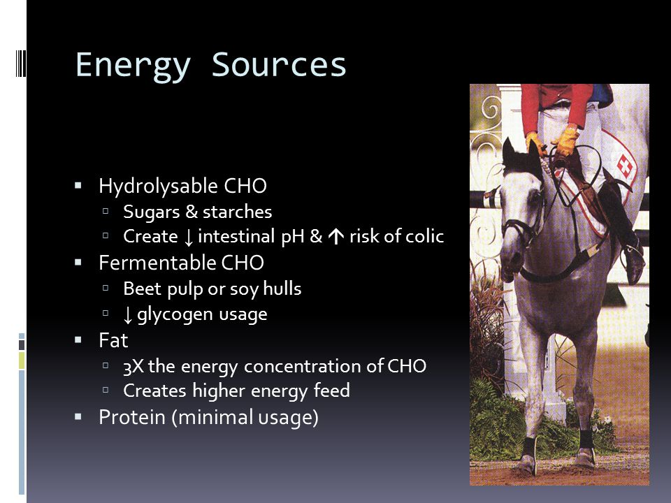 Energy Sources  Hydrolysable CHO  Sugars & starches  Create ↓ intestinal pH &  risk of colic  Fermentable CHO  Beet pulp or soy hulls  ↓ glycog