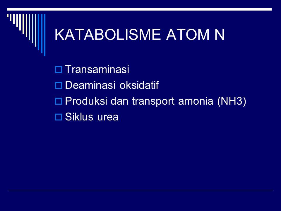 KATABOLISME ATOM N  Transaminasi  Deaminasi oksidatif  Produksi dan transport amonia (NH3)  Siklus urea