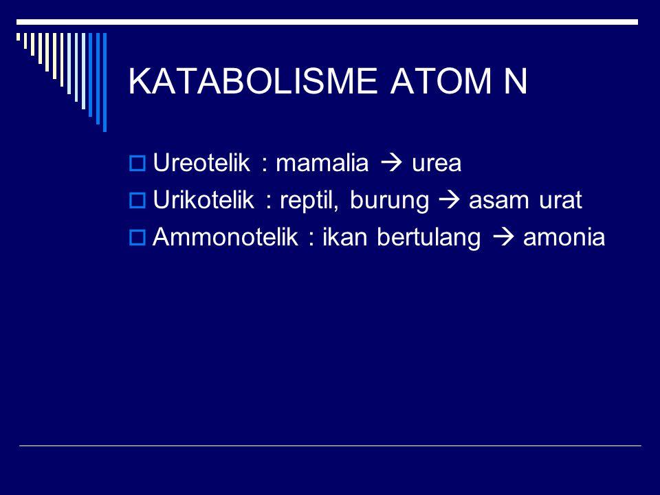 KATABOLISME ATOM N  Ureotelik : mamalia  urea  Urikotelik : reptil, burung  asam urat  Ammonotelik : ikan bertulang  amonia