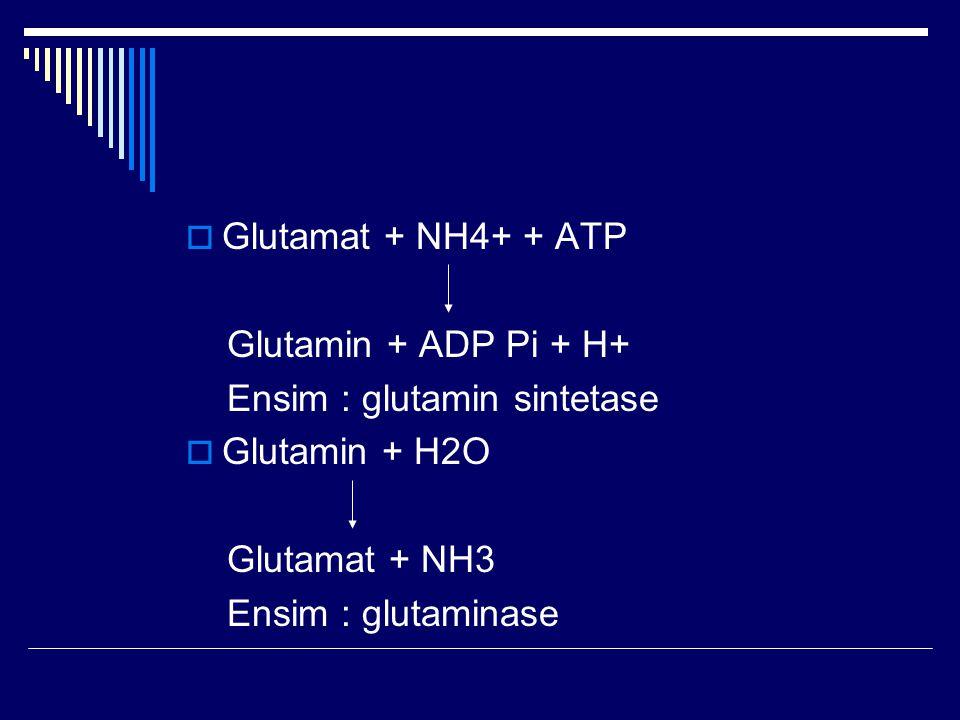  Glutamat + NH4+ + ATP Glutamin + ADP Pi + H+ Ensim : glutamin sintetase  Glutamin + H2O Glutamat + NH3 Ensim : glutaminase